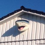 Sharky Fehmarnsund -WG 1- - Fehmarnsund