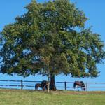 Pferde auf der Weide nebenan