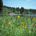 Waldseebad Hahnenklee