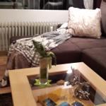 Der gemütliche Wohnbereich mit einer weiteren Doppelbettcouch