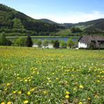 Niedersfelder Hillebachsee - Frühjahrserwachen
