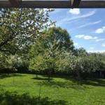 Blick in den Obstgarten