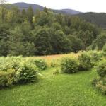 Bergwiese hinter dem Haus