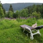 Harz-See-Lodge, Ferienwohnung 2 - Schulenberg