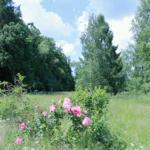 Das Gartengrundstück ist kein englischer Garten, sondern ein Naturgrundstück.