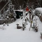 Blick aus dem Wintergarten....die Vögel kommen regelmäßig zur Futterstelle