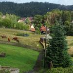 Blick ins Tal mit Oberharzer Höhenvieh.