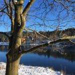 Dorfteich im Winter