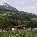 Ferienwohnung Berghütte - Rettenberg