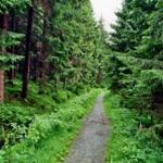 Wanderweg Dammgraben