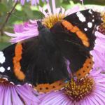Herbstbesucher in unserem Garten