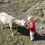 kinderliebes Schaf