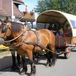 Romantische Kutschfahrt für unsere Gäste. Abholung direkt vor dem Haus. Mit der Kutsche geht es durch die Flora und Fauna von Bad Sachsa. Fahrtdauer ca. 1,5 Stunden.