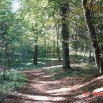 Herbstimpressionen - Wanderweg im herbstlichen Sonnenschein.