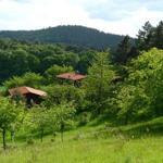 Ansicht vom Wald auf Bungalow B und C