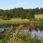 Sumpfteich im Sommer (Bade- und Angelteich in ca. 150 Meter Entfernung
