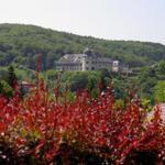 Blick aus dem Ferienhaus auf das Stolberger Schloß im Sommer