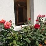 Rosen vorm Fenster