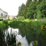 Teichanlage mit Forellen