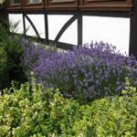Blühender Garten um die Wohnung