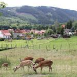 Entspannung bietet der Blick über das angrenzende Grundstück in die harzer Berge.