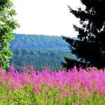 eine von vielen Hohegeißer Bergwiesen mit fantastischer Fernsicht...