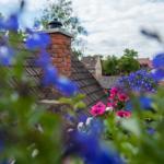 Blumen auf Dachterrasse