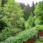 Wald direkt hinter dem Haus
