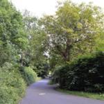 Der Hercyniaweg: Ruhige Lage direkt am Wald.