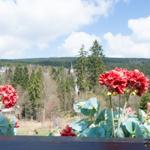 der Ausblick vom Panorama - Balkon einfach traumhaft