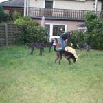 Gastfamilie mit Ihren Hunden,gerne können es auch ein paar mehr sein.....