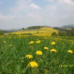 Genießen Sie die Ruhe und die Natur im Hochsauerland