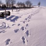 Herrliche Winterwanderwege mit vielen Rodelmöglichkeiten