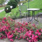 Unser eigener kleiner Rosengarten mit zusätzlicher Sitzgelegenheit