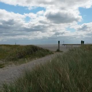 Strandläufer - Burgtiefe-Südstrand