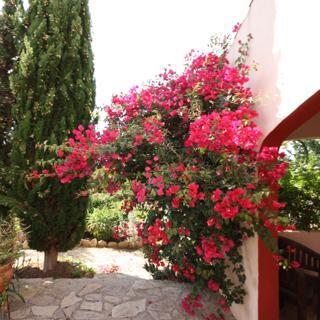 Casa-Nana Piso Luna (OG) - Llucmajor/Baleares