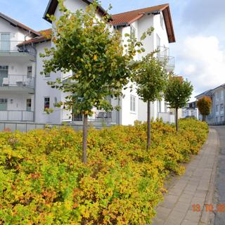 Wilhelmstr. 10 Whg 01 - Seebad Ahlbeck