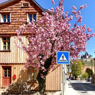 Exklusive ökologische Ferienwohnung City DG - Wernigerode